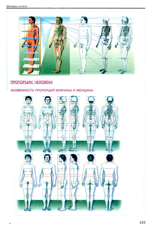 Анатомия человека скачать книгу