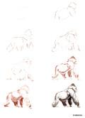 Эймис Л. Дж., Бадд У. – Рисуем 50 исчезающих животных - страница