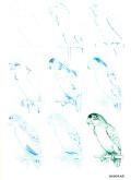 Эймис Л. Дж., Д'Адамо Т. – Рисуем 50 птиц - страница